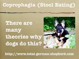 Coprophagia - Eating Feces - Poop Eating - Coprophagia in Dogs
