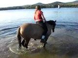Zwemmen met de paardjes2