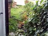 Evicted Tenants destroy Rental Property