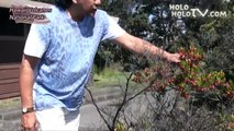 キラウエア火山から始まる ハワイ島の旅 ハワイ・Big Island 01