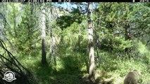 Quelle est cette odeur?  - Images sur le vif ---- Parc national Banff