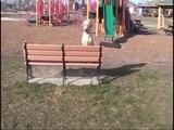 Unleashed Unlimited Dog Training Austin Round Rock Texas