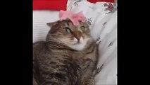 Une fleur fait bugger un chat