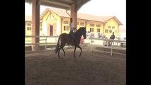 Equitazione Classica Francesco Vedani- Riaddestramento al piaffer 3 mesi dopo