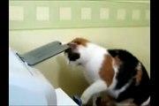chat fou avec une photocopieuse