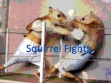 Cat  fighting Bear and 3 round of Squirrel fight