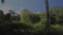 """3/ la danse des feuilles """" Je marche dans la beauté"""" promenade chorégraphique  http://compagnielucmaubon.free.fr"""