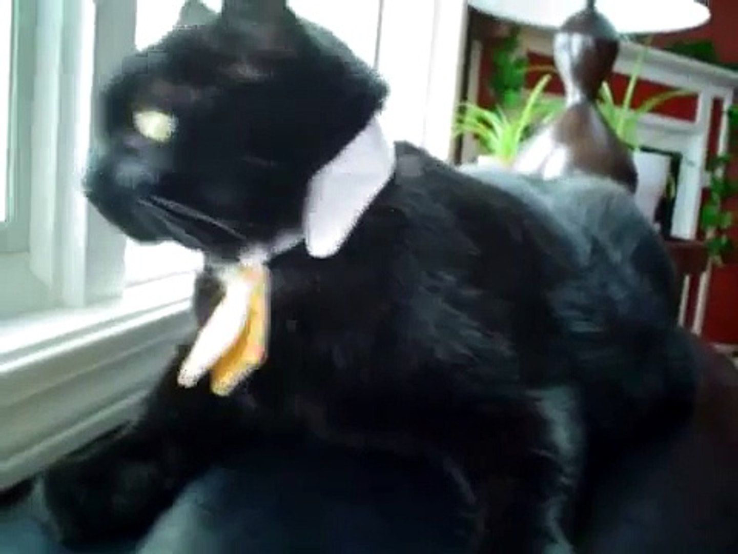 black cat wearing a sweet neck tie!