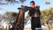 Baby Giraffe at South African Farm