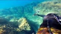 chasse sous marine, chasse sur petit fond,en méditerranée été 2014