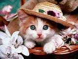 【アニマル】癒し~かわいい動物画像集【動画】