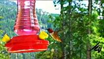 Worlds Smallest Birds -  Worlds Largest Birds