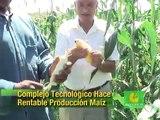 Produciendo Maiz con Barbary Plante