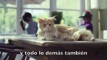 Cómico gato que quiere ser perro⎟ Buenas noticias⎟Buendiario