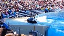 SeaWorld San Diego Travel video on camera & Attraction | Visit Seaworld Sandiego Dolphin show