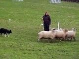 Concours troupeau CLASSE 1  -  St Germain sur Avre  -  13.01.13