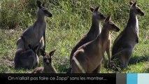 Le Zapp' d'Adé & Jean: Australie. Partie 2.