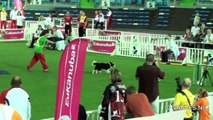 Liévin Agility World Championship 2011 Large Jumping Painful moments