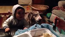 Un chien dit maman alors qu'un bébé n'y arrive pas