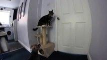 Un chat ouvre la porte à un chien