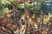 British Columbia Moose Hunt | Moose Hunting Video