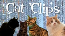 Spa Day -- Cat Clips #138