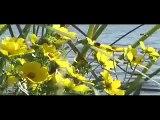 Dj SANDOORS  SMOOTH LAKE & SMOOTH PEOPLE +SMOOTH MUSIC