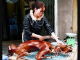 Tiere der Welt leiden