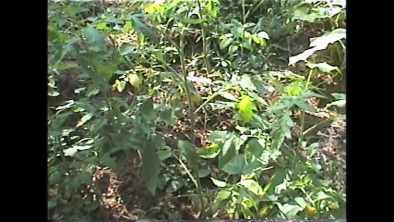 My Wisconsin Wilderness Garden 2009 / Aquaponics Question