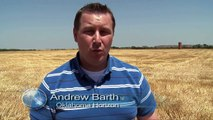 Amber Waves of Grain (Wheat Harvest 2012)