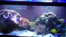 Salt water marine reef tank
