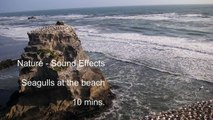 Nature Sounds - Seagulls on the Beach - Sound effects - 10 mins