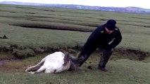 Un homme sauve un cheval et son poulain