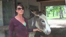 Balade avec un âne à Saint-Bris-le-Vineux