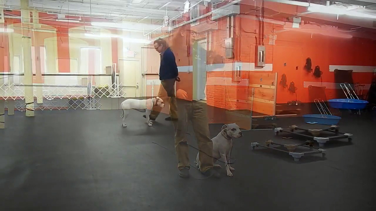 Training Deaf Dog on Remote Collar