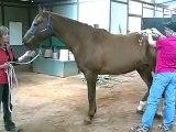 Sore Cranky or Lame Horse?  April Battles - Holistic Horse Works