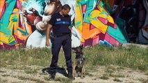 Obeissance d'un chien de Police