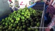 วิธีคัดขนาดลูกมะนาว ตลาดกลางเกษตรท่ายาง เพชรบุรี