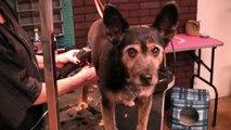 South Paws Pet Grooming Oklahoma City (405) 340-1101 - Oklahoma City Dog Groomers