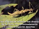 Insectos Educativo