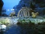 Osaka Aquarium (by dom bower)