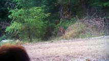 Is it Sasquatch?  Trail Camera footage from the FMO testing facility in Kalama, WA