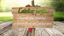 Semer des plantes aromatiques en jardinière