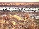 WASA (Nord CAMEROUN)  Animaux en liberté :  Elephants, antilopes, girafes...