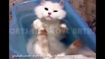 Des chats trop sympas qui adorent se mettre à l'eau