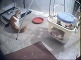 New videos in www mycats ir @ Funny Animal Videos   Funny Pet Videos, Funny Cat Videos, Cute Pets 3
