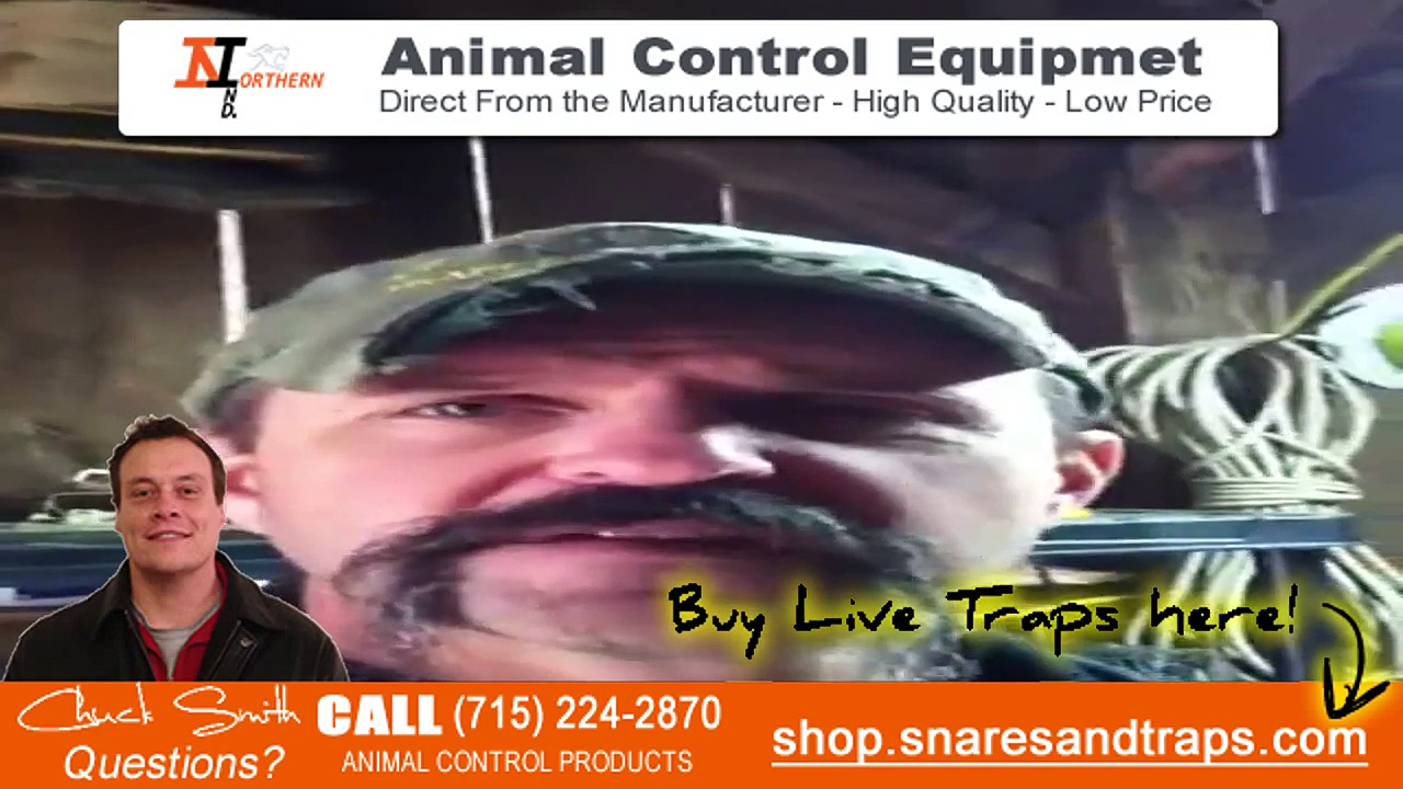 How to catch rats | How to trap rats