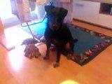 Gismo sucht seinen Ball :)