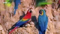 Animal Planet | Discovery Channel | Wild Life Documentary 2015 | National Geographic Wildl