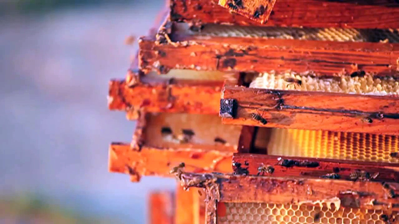 Urban Beekeeping Could Be Doing More Harm Than Good